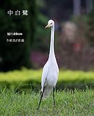2009.10~11 鳥況 :IMG_7418.JPG