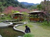 山櫻舞春風 IN 八仙山:DSC02028.JPG