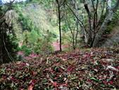 山櫻舞春風 IN 八仙山:DSC02321.JPG