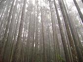 馬崙山:DSC02420.JPG