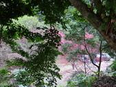 山櫻舞春風 IN 八仙山:DSC02002.JPG