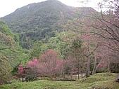 八仙山...櫻花宴:八仙山 039.j