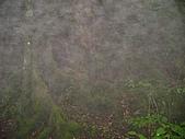馬崙山:DSC02514.JPG