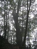 馬崙山:DSC02457.JPG