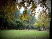 春の紅葉---惠蓀林場:大草原
