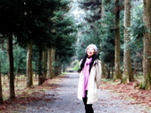 春の紅葉---惠蓀林場:香杉步道+水杉林