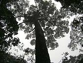 馬崙山:DSC02465.JPG