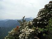 綺麗世界...鳶嘴山:美麗世界(鳶嘴山杜鵑花)4.2