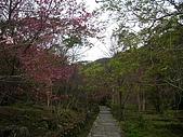 八仙山...櫻花宴:八仙山 026.j