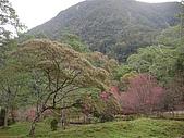 八仙山...櫻花宴:八仙山 040.j