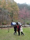 春の紅葉---惠蓀林場:DSC01798.JPG