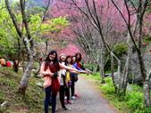 山櫻舞春風 IN 八仙山:DSC02041.JPG