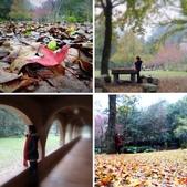 春の紅葉---惠蓀林場:相簿封面