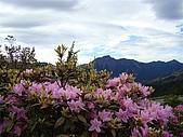 紅毛杜鵑的故鄉...合歡北峰: