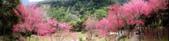 山櫻舞春風 IN 八仙山:DSC02284.JPG