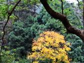 春の紅葉---惠蓀林場:DSC01879.JPG