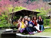 山櫻舞春風 IN 八仙山:DSC02033.JPG