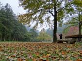春の紅葉---惠蓀林場:初春の楓紅...映照著山櫻、綠蔭