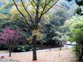 春の紅葉---惠蓀林場:DSC01970.JPG