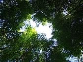 金柑樹山:金柑樹山