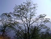 東洗水山:雪見+東洗水山 02