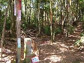 金柑樹山:嶺頭山三角點