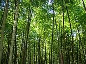 金柑樹山:孟宗竹林