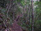 馬崙山:DSC02383.JPG