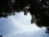 金柑樹山:觀音圈