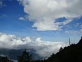 塔塔加植物:蔚藍的天空...是雲海最好的背景