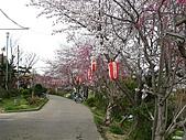 2008關西春櫻D4:佐保川