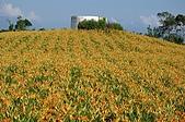赤科山的金針花:IMGP5229.jpg