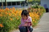 赤科山的金針花:IMGP5307.jpg