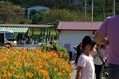 赤科山的金針花:IMGP5373.jpg