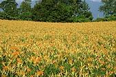 赤科山的金針花:IMGP5230.jpg