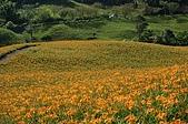 赤科山的金針花:IMGP5285.jpg