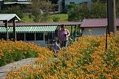 赤科山的金針花:IMGP5325.jpg