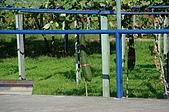 赤科山的金針花:IMGP5256.jpg