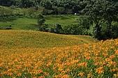 赤科山的金針花:IMGP5374.jpg