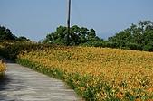 赤科山的金針花:IMGP5231.jpg
