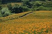 赤科山的金針花:IMGP5286.jpg