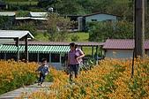 赤科山的金針花:IMGP5326.jpg