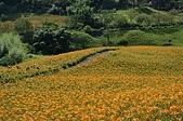 赤科山的金針花:IMGP5375.jpg