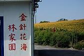 赤科山的金針花:IMGP5399.jpg