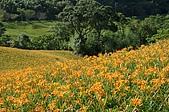 赤科山的金針花:IMGP5287.jpg