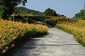 赤科山的金針花:IMGP5288.jpg
