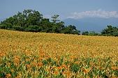 赤科山的金針花:IMGP5289.jpg