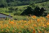 赤科山的金針花:IMGP5310.jpg