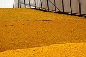 赤科山的金針花:IMGP5402.jpg