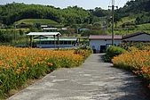 赤科山的金針花:IMGP5236.jpg